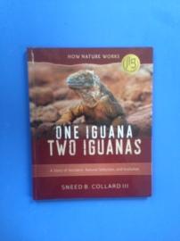 one iguana