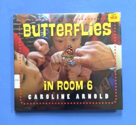 butterflies-in-room-6.jpg